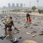 MII de pesti pe STRADA. O zi obisnuita in China