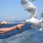 Imagini socante pe litoral. Pescarusii infometati ataca turisti