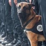 police-dog-diesel-393095