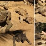 Cea mai cumplita ZOO: Animale MUMIFICATE, dupa ce au fost lasate sa moara de foame – Galerie FOTO