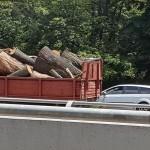 Masacrul continua. Primarul Firea a bagat DRUJBELE si in Parcul Herastrau, copaci sanatosi sunt macelariti