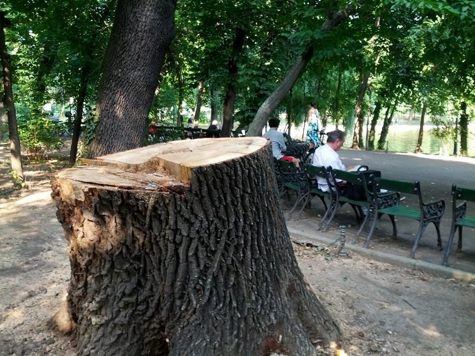 parc cismigiu3