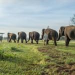 Gasirea unui remediu pentru CANCER este posibila. De ce elefantii nu se imbolnavesc de cancer, desi sunt mult mai mari decat oamenii?
