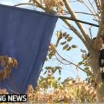 """""""Stegarul dac"""", prietenul celor de la Antena 3, s-a suit intr-un copac in fata Tribunalului Bucuresti si face SCANDAL"""