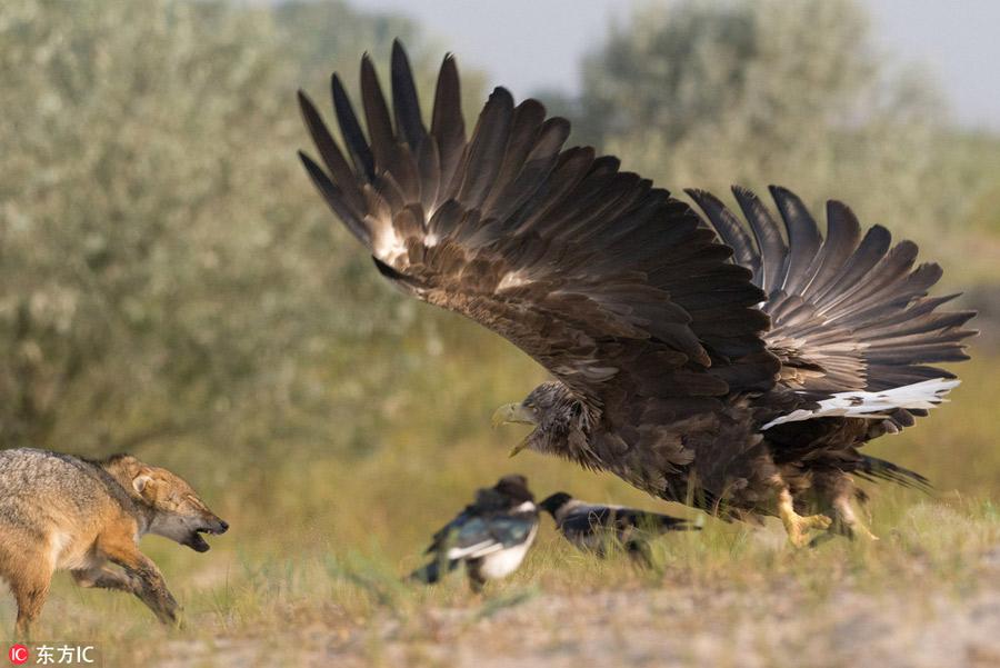 [Image: vultur.jpg]