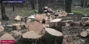 copaci-5